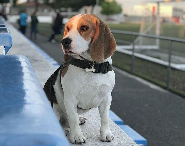 Free Dog Training w/ Purchase Image