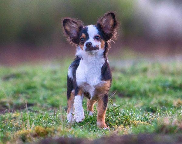 Professional Dog Training Image